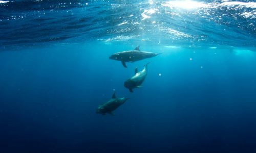 5 Best places in the world to surf with dolphins